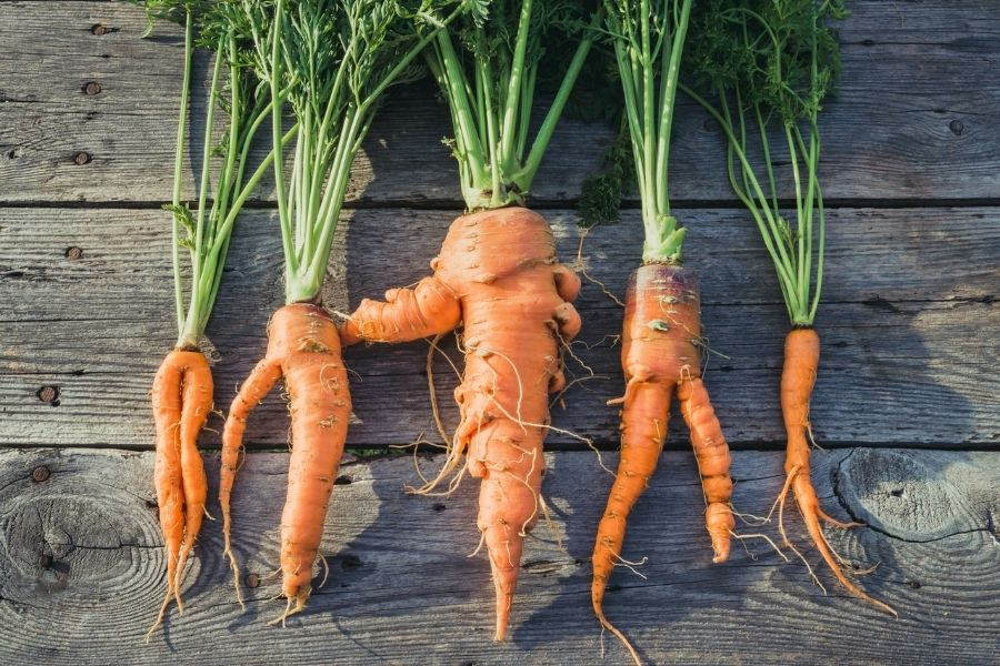 Imperfection in the carrots
