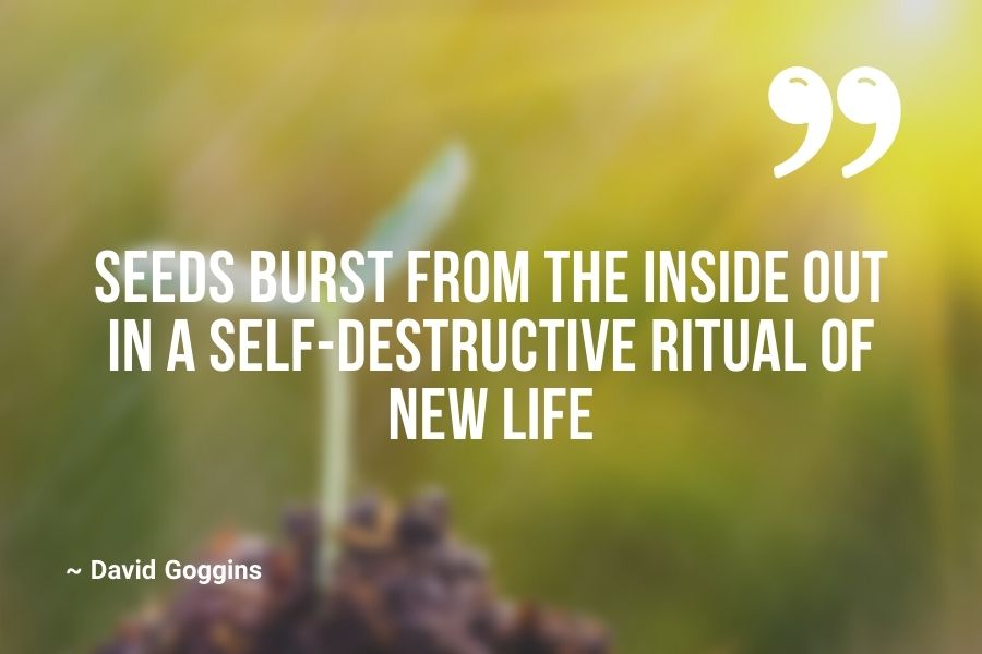 Seeds burst from the inside out in a self-destructive ritual of new life